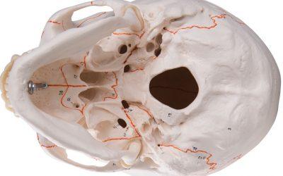 VIDEOAULA: Revisão de Crânio para Neuroanatomia