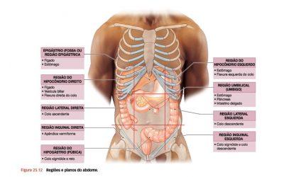 Desenho das 9 regiões do abdome