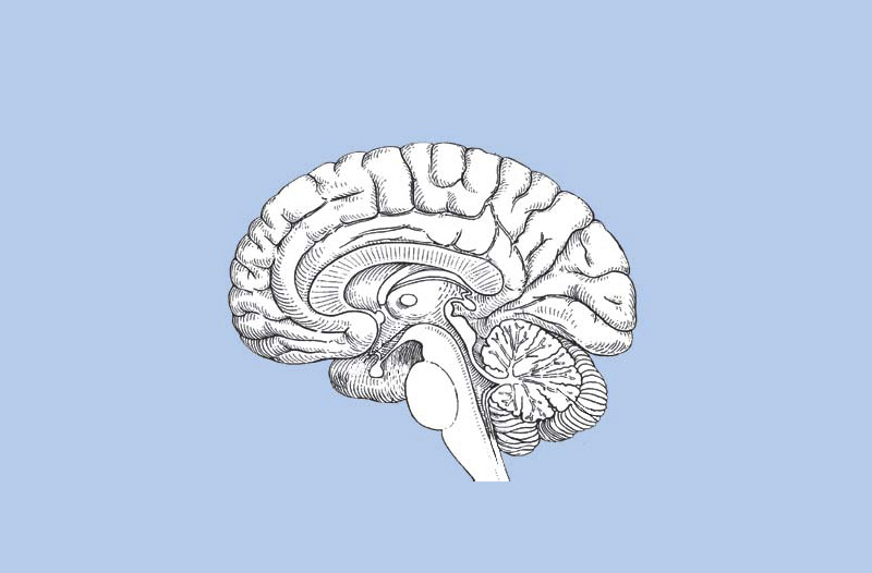 Exercício Revisão Neuroanatomia Parte 2/2