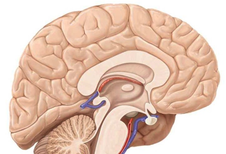 Prova – 451 – Neuroanatomia