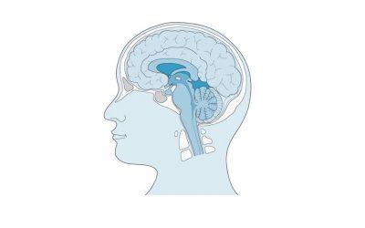 Exercício Revisão Neuroanatomia