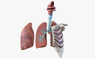 Trabalho/Seminário Sistemas Circulatório e Respiratório – Prova Prática 2019.1 EDFS